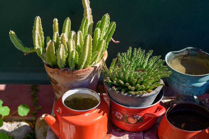Beautiful succulent plants. stock photo