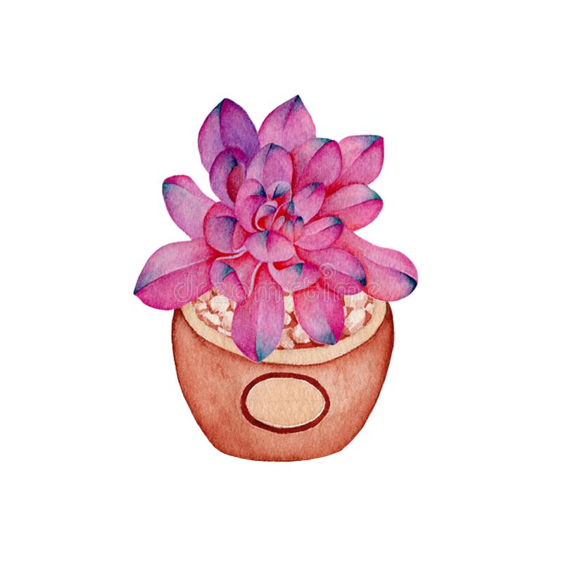 Succulent,cactus watercolor painting.Watercolor hand painted botanical. illustration of a succulent,cactus isolated. On white background royalty free illustration
