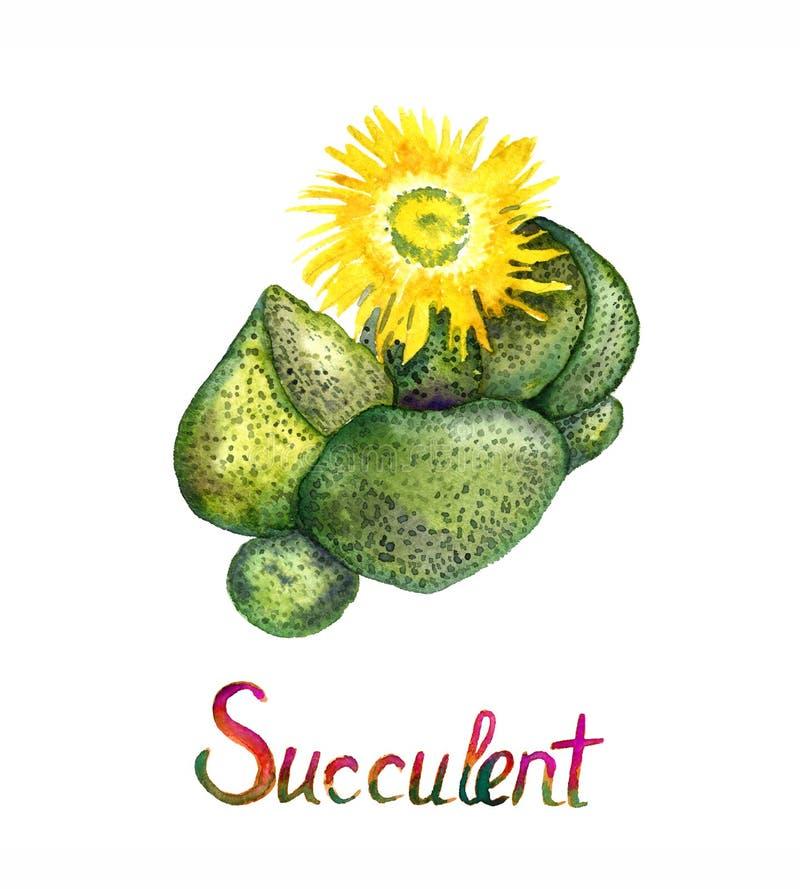 Succulent compactus Pleiospilos, kwaggavy, εγκαταστάσεις συκωτιού, εγκαταστάσεις πετρών, διασπασμένος βράχος ή mimicry κίτρινες α ελεύθερη απεικόνιση δικαιώματος