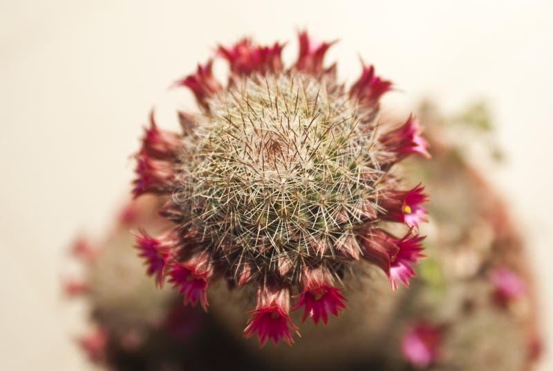 Succulent con la flor fotos de archivo
