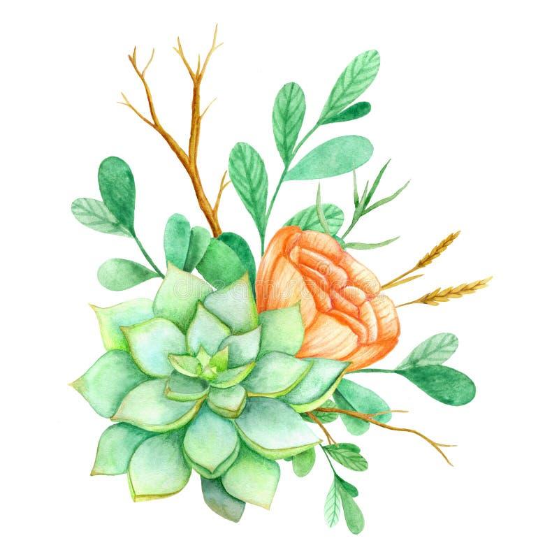 Succulent con las flores en un fondo blanco Ejemplo dibujado mano de la acuarela Perfeccione para la tarjeta, casandose la invita libre illustration
