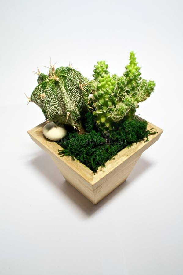 Succulent couple