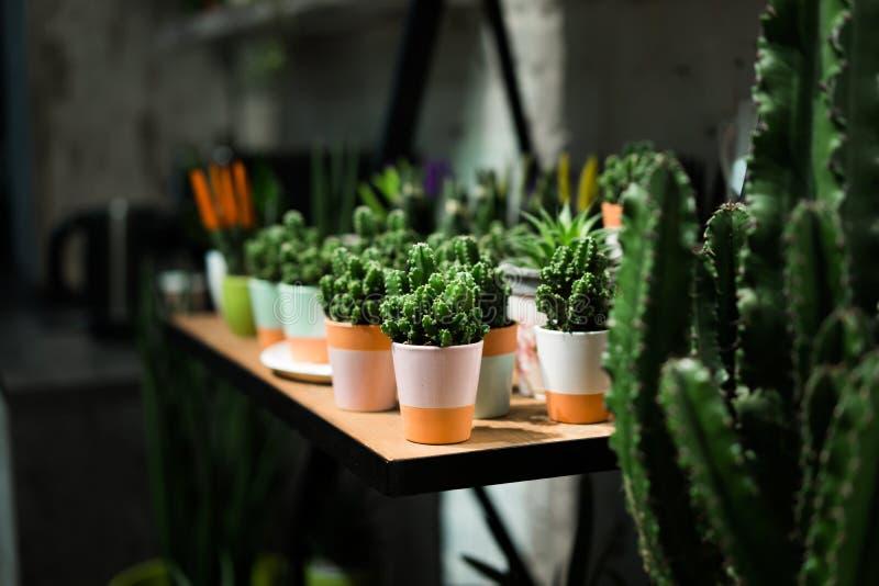 Succulent de vert dans un pot d'argile dans l'intérieur de grenier dans le style scandinave photographie stock libre de droits