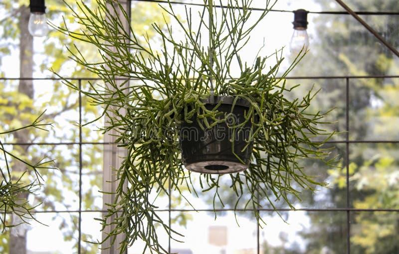 Succulent in een plastic hangende pot voor a paned venster met bokehbomen die door tonen royalty-vrije stock afbeeldingen