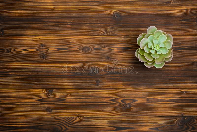 Succulent en fondo de madera Visión superior imagen de archivo