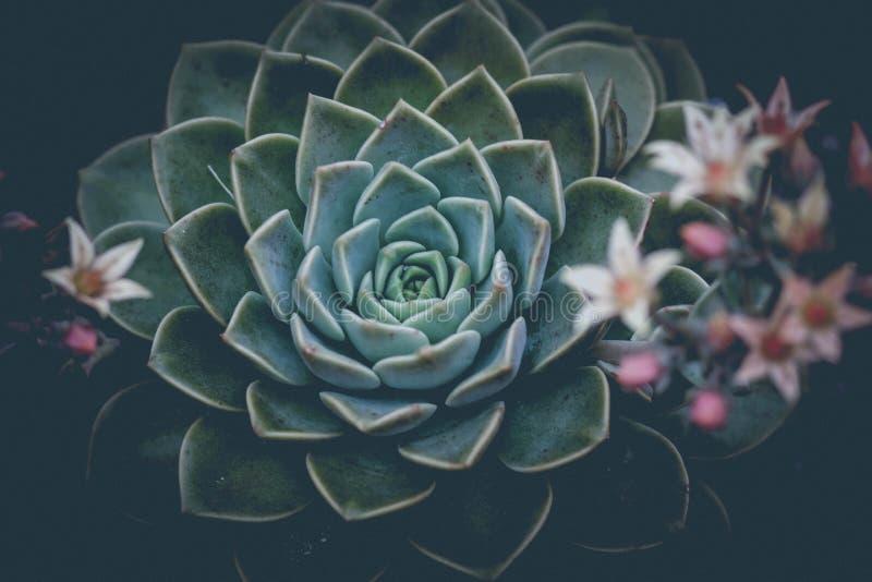 Succulent Film Fade stock images