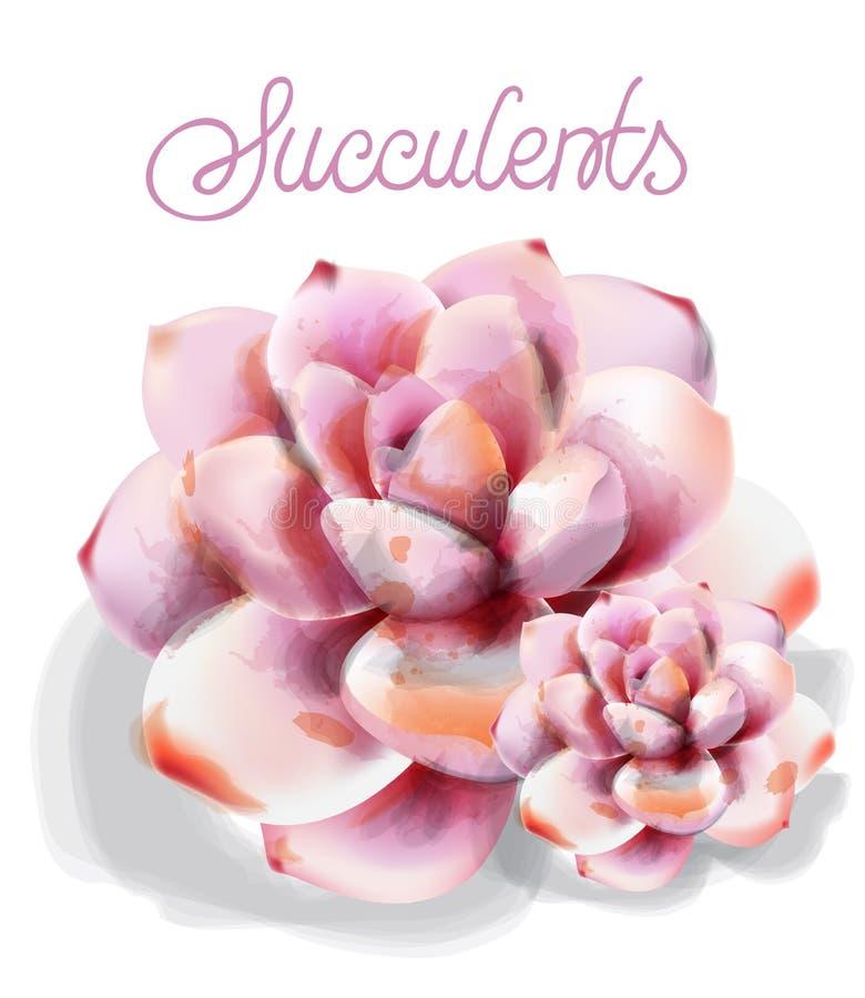 Succulent flower Vector watercolor isolated. Vintage floral declicare decors. Succulent flower Vector watercolor isolated. Vintage floral declicare decor stock illustration