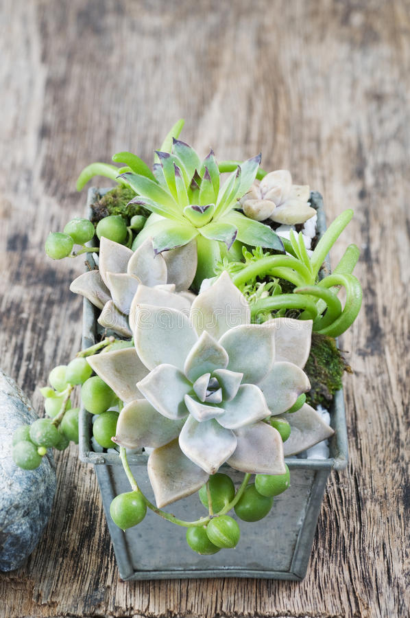 Succulent garden in a steel pot on a wooden background royalty free stock photos