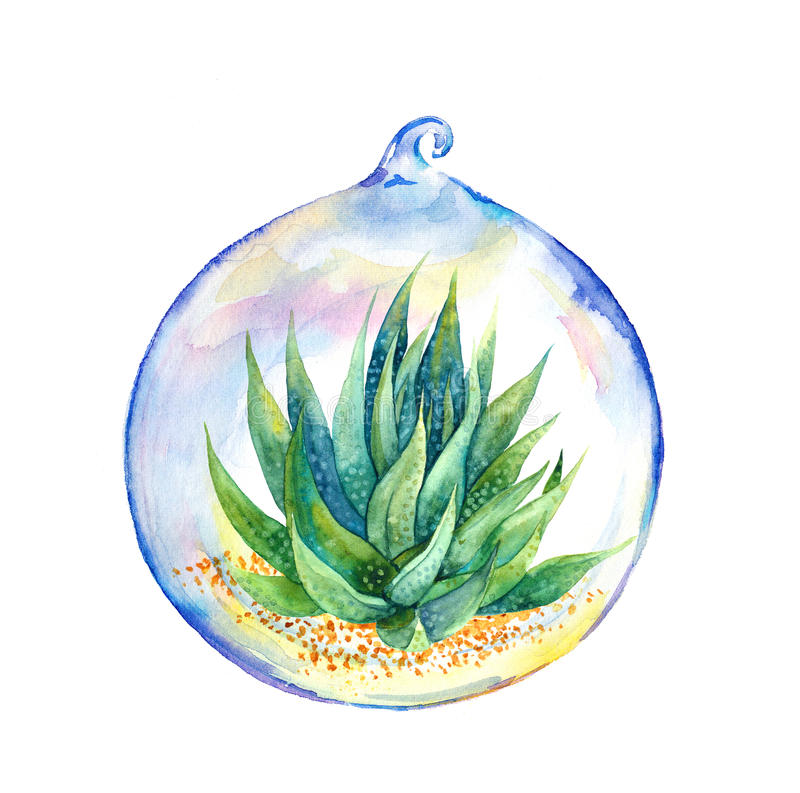 Succulent in glass ball. Watercolor. Succulent plant in glass ball. Watercolor painting vector illustration