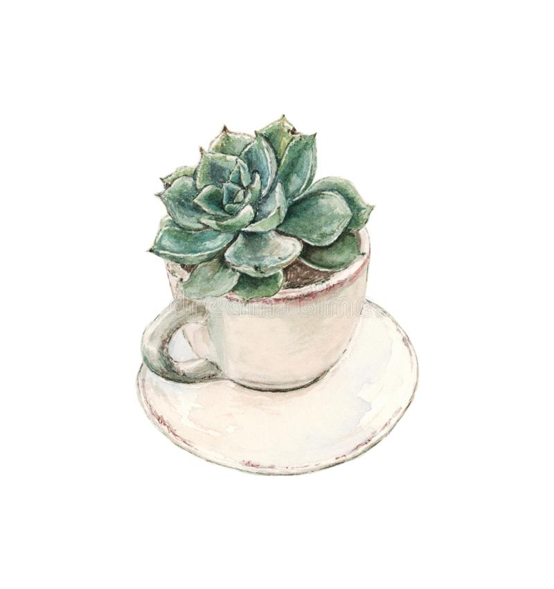 Succulent grows in a tea cup with a saucer , watercolor. Succulent grows in a tea cup with a saucer on a white background, watercolor vector illustration