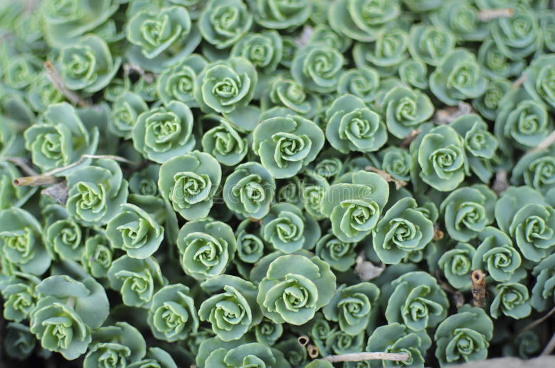 Download Succulent pattern stock photo. Image of abstract, macro - 24987564