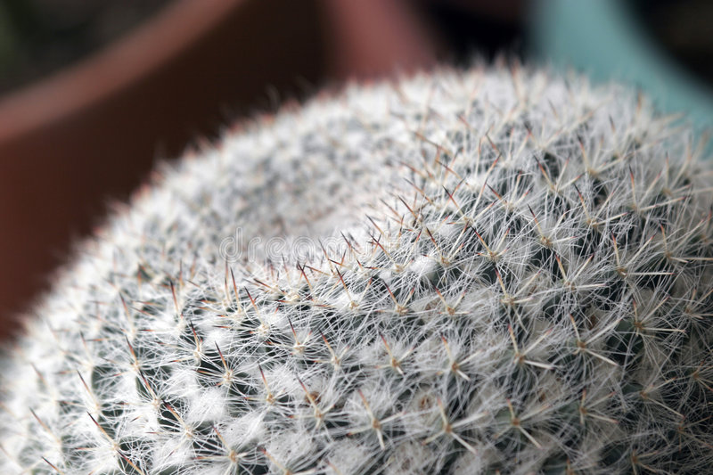 Download Succulent plant stock photo. Image of spine, grassa, thorns - 1245864