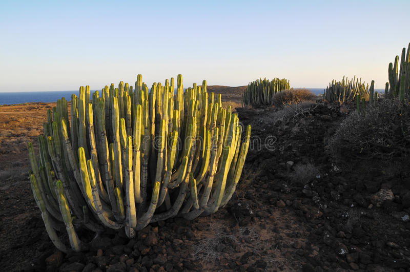 Download Succulent Plant Cactus On The Dry Stock Image - Image: 34235521
