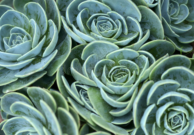 Succulent plant stock image