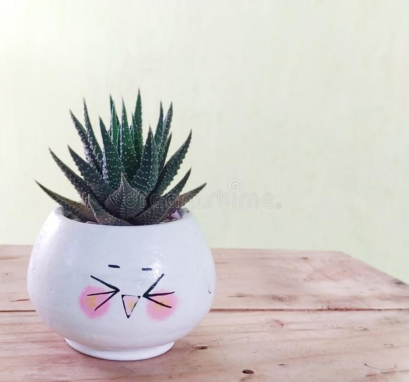 Succulent plant genus haworthia with emoticon planters. Succulent plant genus haworthia wiyh emoticon stock image