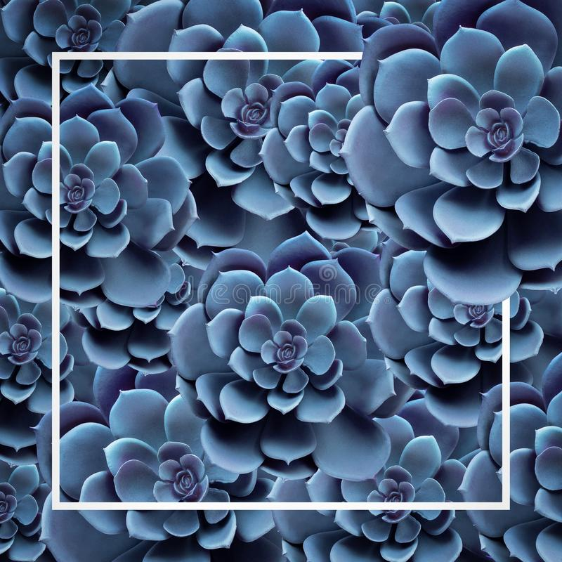Succulent plant pattern top view in blue color.For decorative design layout.Nature cover banner royalty free stock images