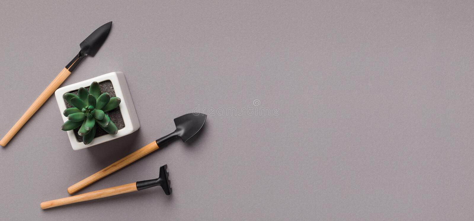 Succulent plant in pot and mini gardening tools on table stock photos