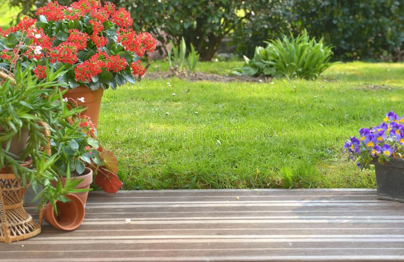 Succulent plant potted blossoming in a garden. On a wooden terrace stock photography