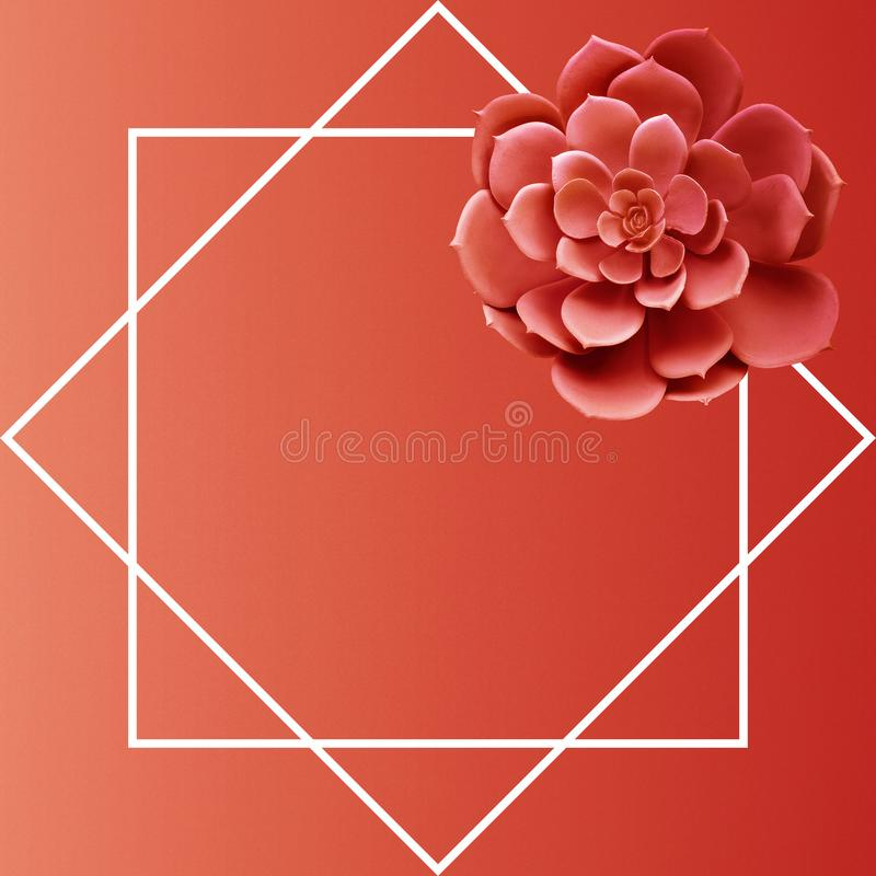 .Succulent plant top view with frame space.living coral color of year 2019 stock image