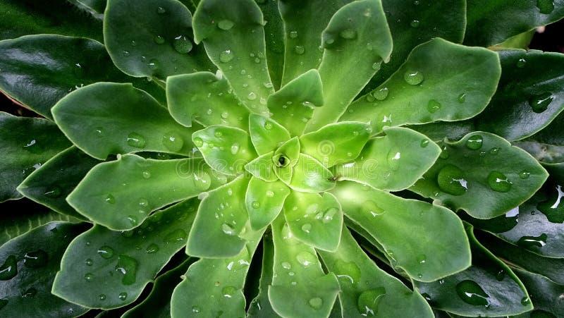 Succulent plants stock image