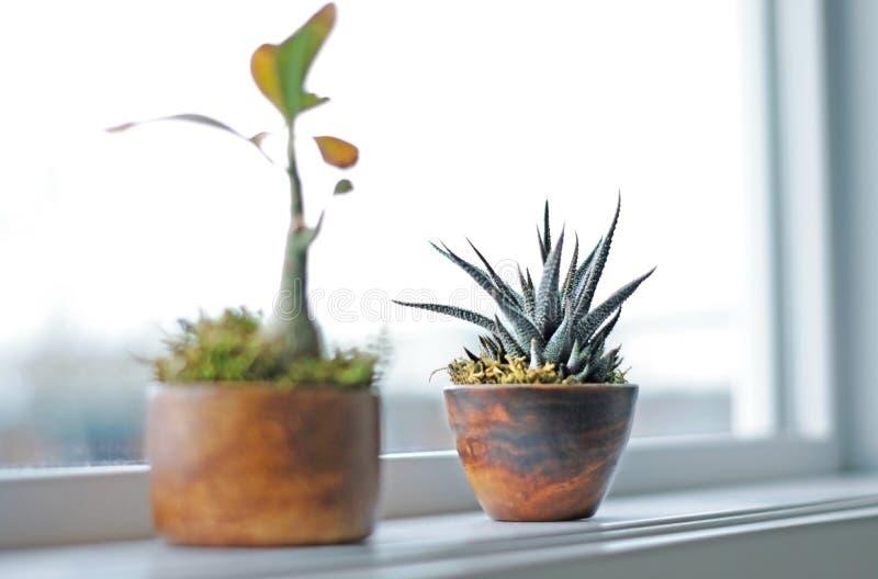 Succulent plants on window ledge in modern bathroom. Calgary, Alberta, Canada stock images