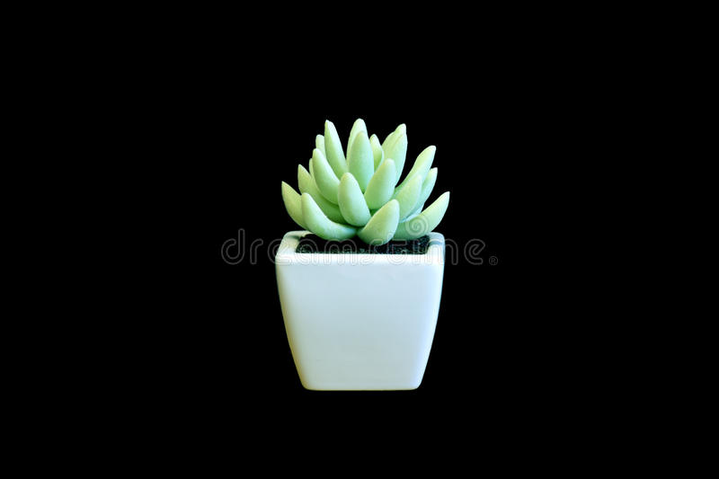 Succulent pot royalty free stock images