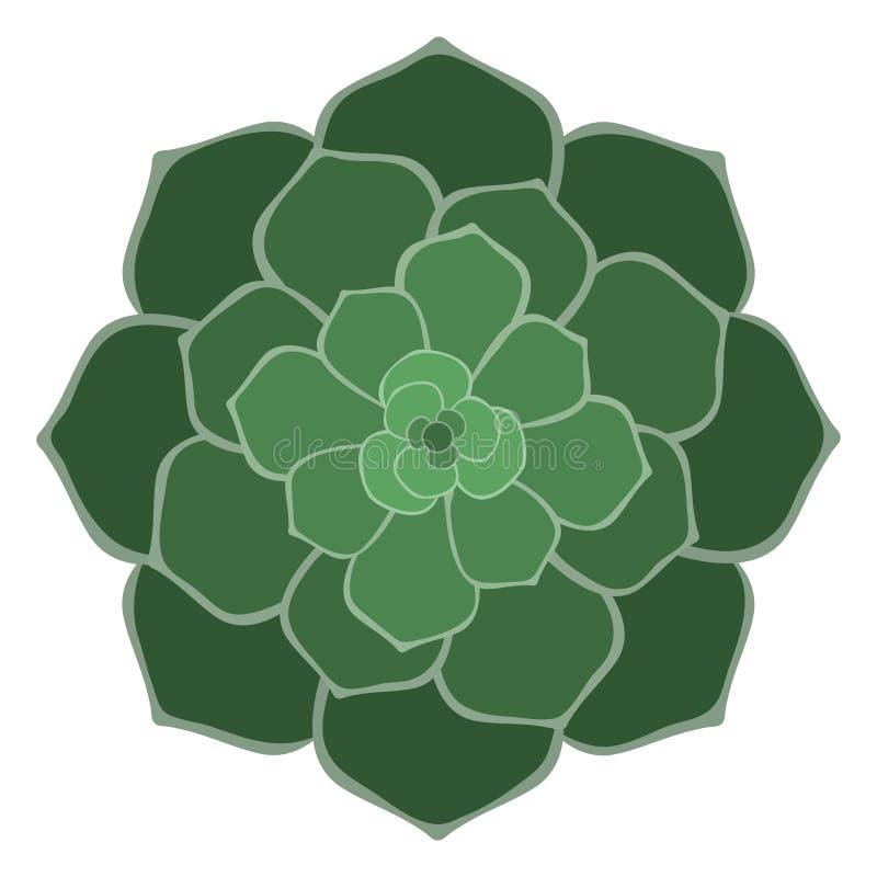 Succulent verde ilustración del vector