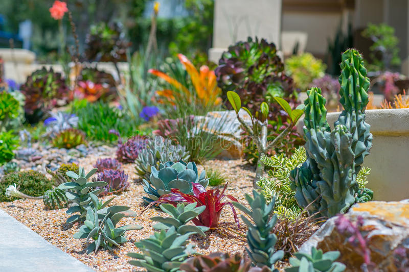 Succulent water wise desert garden royalty free stock photo