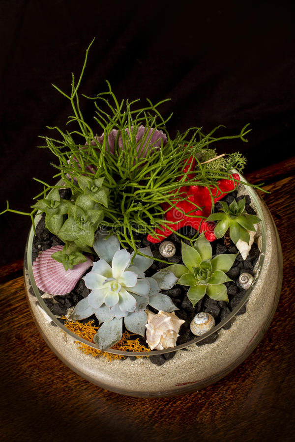 Succulente bloemen in een glaskom stock afbeelding