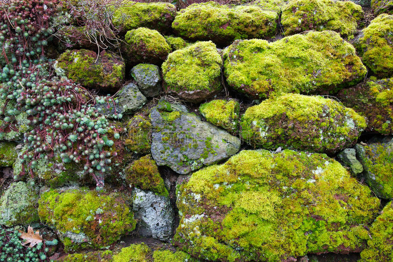 Succulente de rotsmuur van het mos stock fotografie