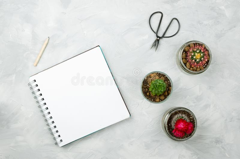 Succulente e cactus con il taccuino con la pagina bianca in bianco del copyspace fotografie stock libere da diritti