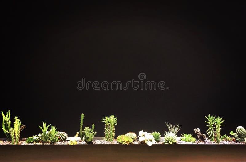 Succulente ingemaakte installaties stock foto