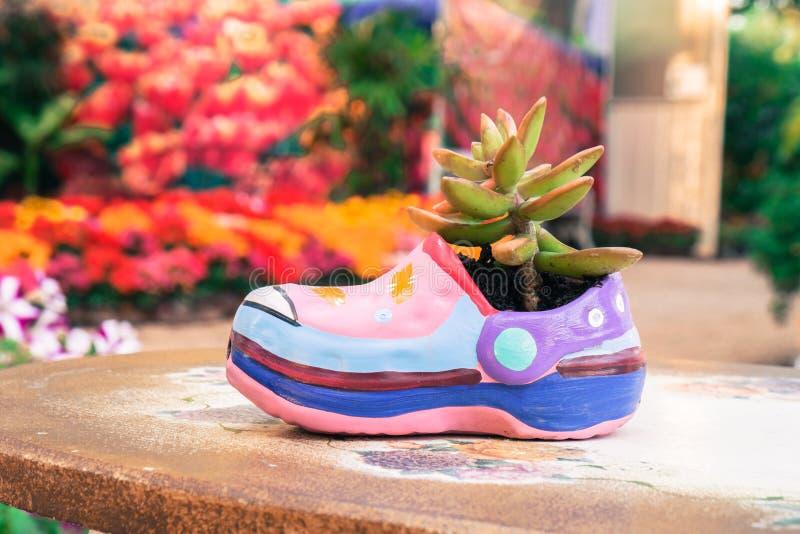 Succulente installatie in schoen-vormige bloempot stock afbeeldingen