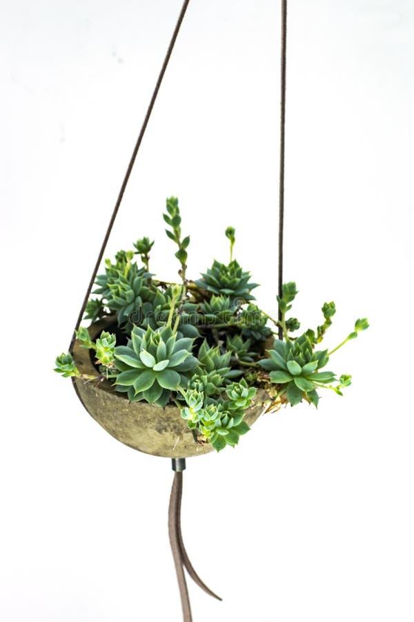 Succulente installatiehanger stock afbeeldingen