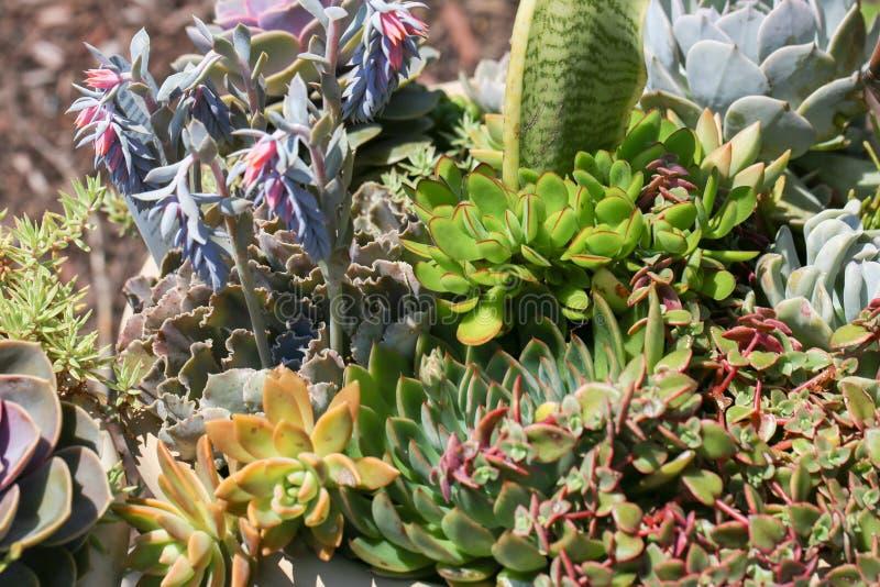 Succulente installaties in concrete potten royalty-vrije stock afbeeldingen