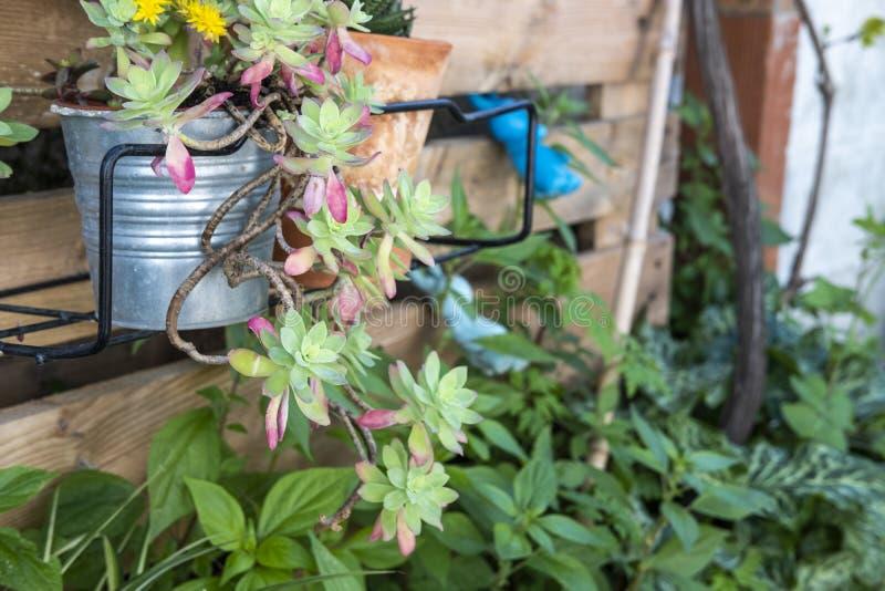Succulente plante dans le détail d'un jardin de style méditerranéen à Barcelone image stock