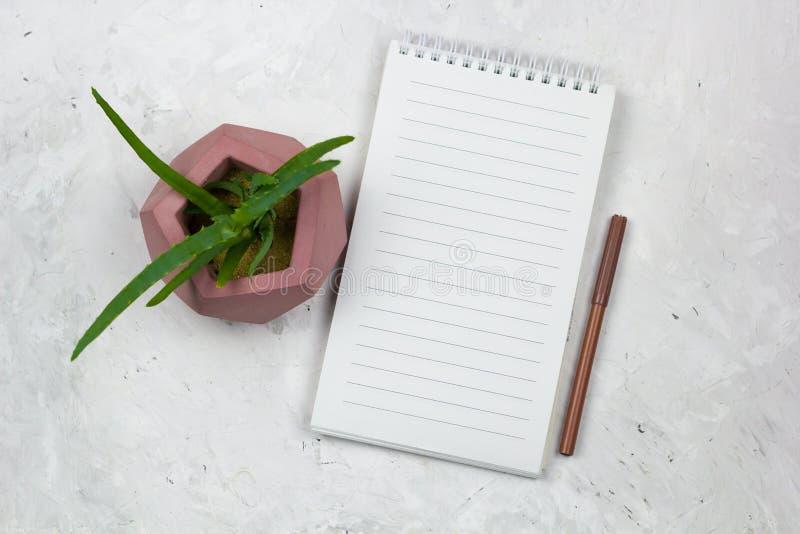 succulente in un vaso concreto ed in un taccuino aperto fotografie stock libere da diritti