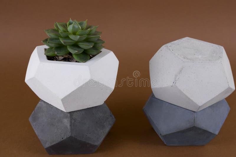 Succulente in un vaso concreto, elemento d'avanguardia di interior design moderno immagini stock libere da diritti