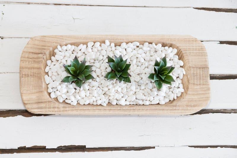 Succulente verde in ciottoli bianchi con fondo di legno d'annata immagini stock