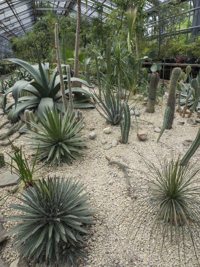 Succulenti e cactus nel giardino di inverno immagini stock
