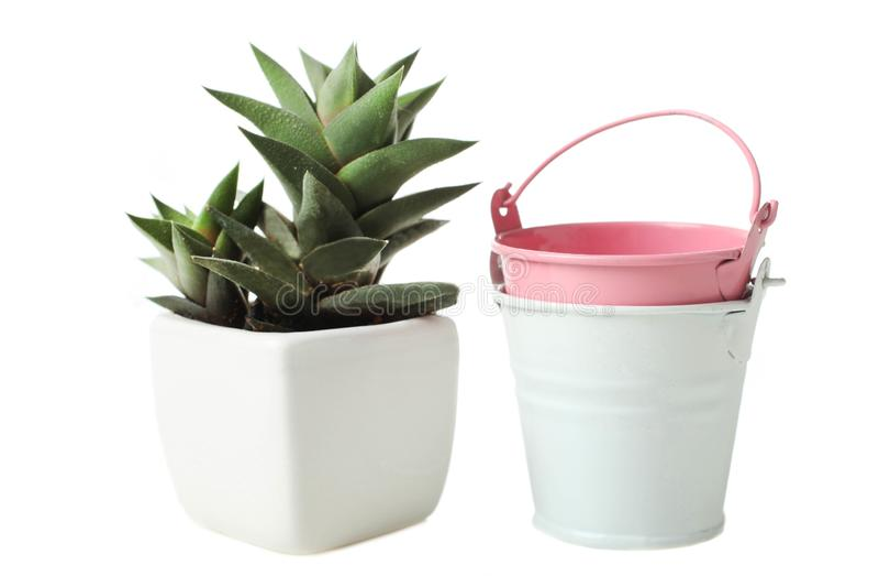 Succulents άσπρο flowerpot και δύο μικρούς κάδους στοκ φωτογραφία