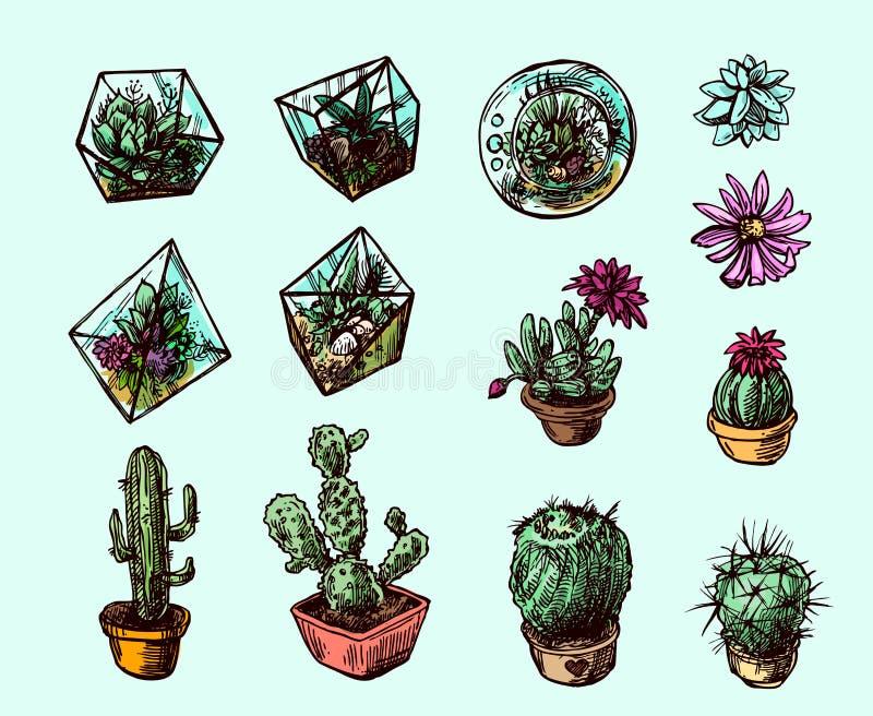 Succulents και κάκτοι ελεύθερη απεικόνιση δικαιώματος