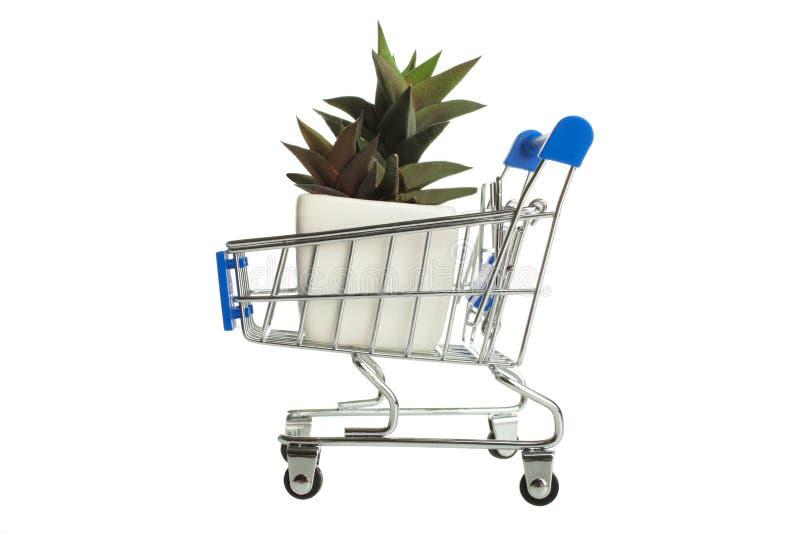 Succulents в вагонетке супермаркета стоковое изображение