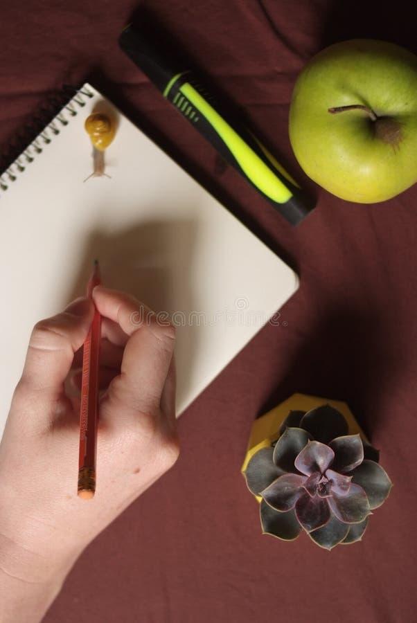 Succulents в желтом конкретном баке на таблице с меньшей улиткой около яблока и тетради o стоковые изображения