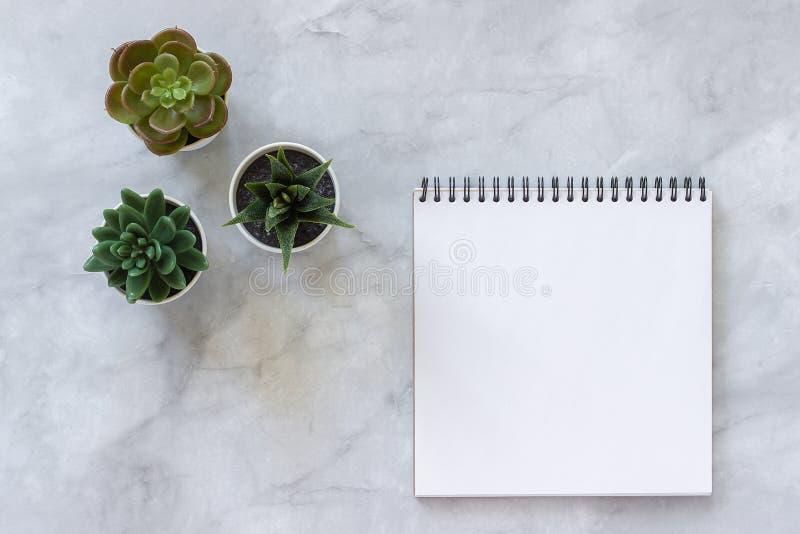 3 succulents и белой открытой пустой тетрадь на мраморной предпосылке таблицы Насмешка взгляда сверху вверх по плоскому положенно стоковое фото rf