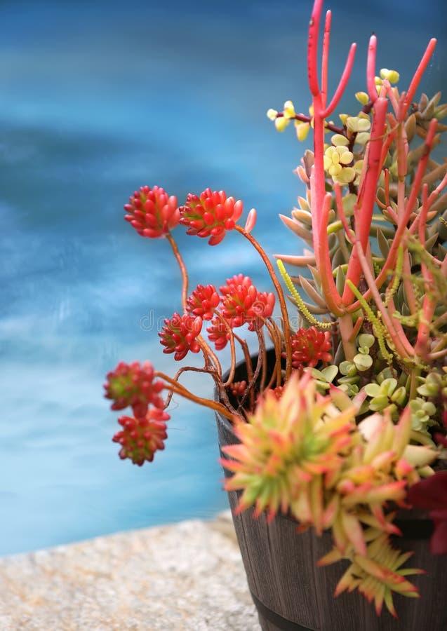 succulents stockfotos