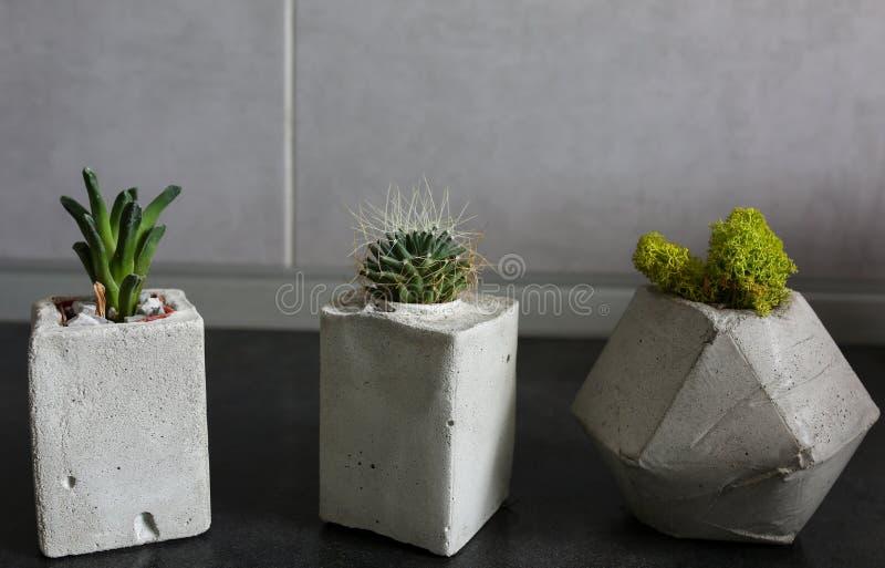 succulents imagenes de archivo