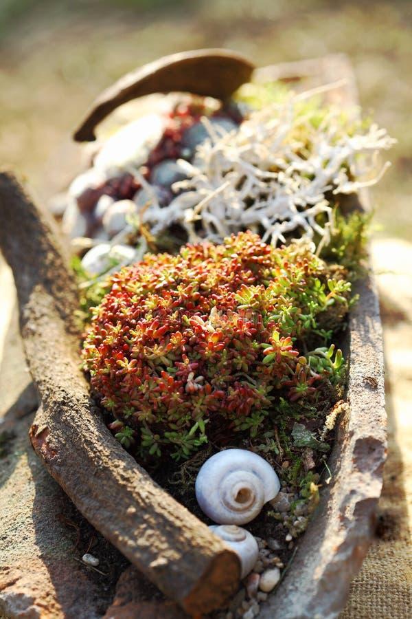 Succulents immagini stock