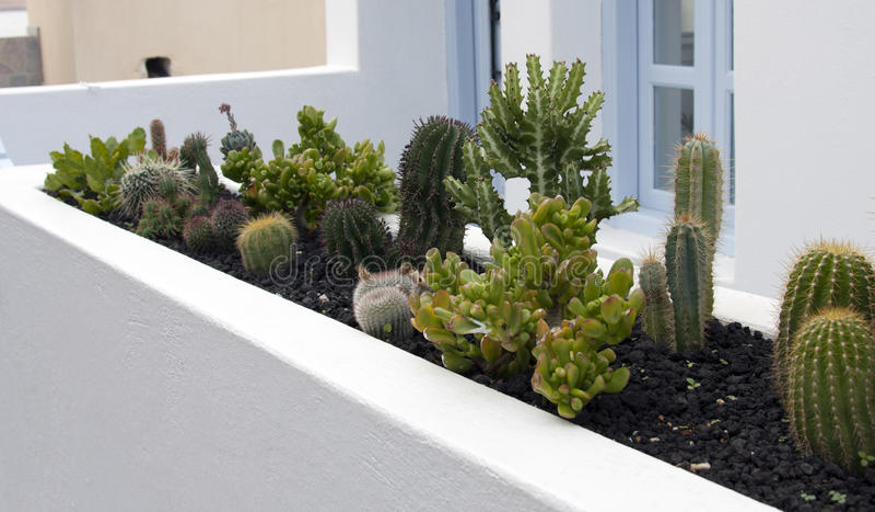 Succulents fotografie stock libere da diritti