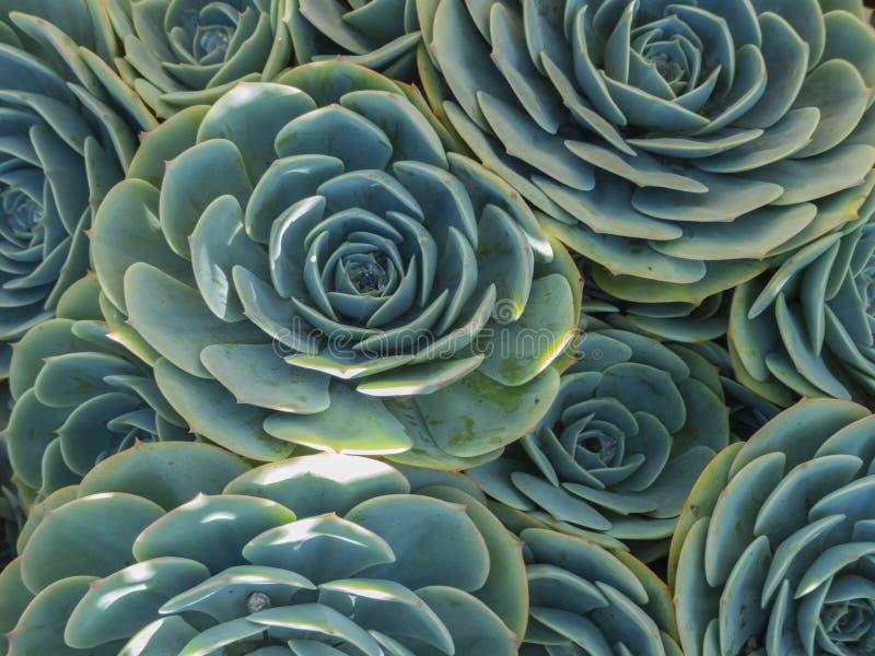 succulents stockfotografie